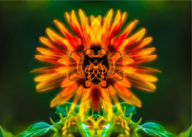 Sun Flower Rising