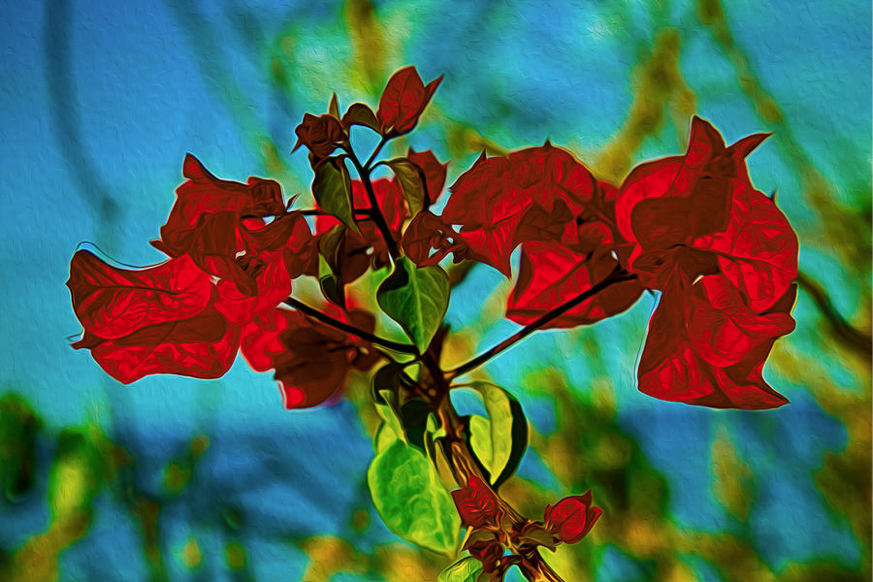 Red Bougainvillea Hawaii Botanical Garden Photography by Omashte
