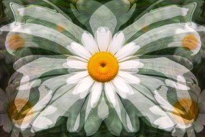 Interdimensional Daisies