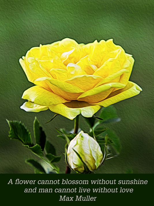 Sunshine on a Yellow Rose Garden Motivational Artwork by Omashte