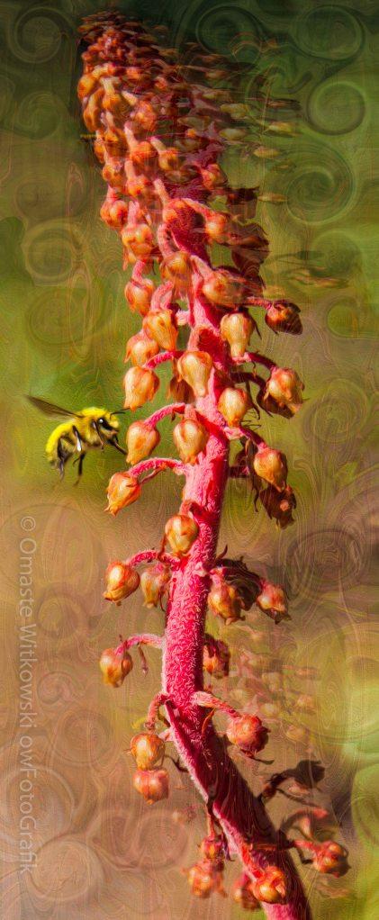 Bee Psychadelic with Me Omaste Witkowski owFotoGrafik.com