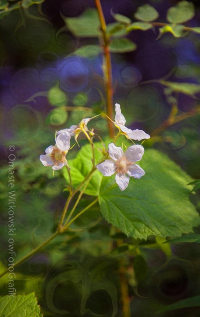 Wandering White Flowers. Omaste Witkowski Motivational Artwork