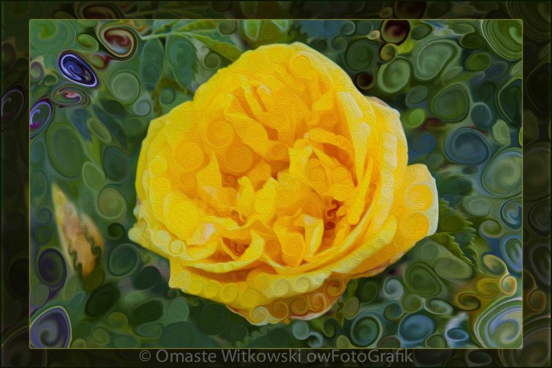 A Yellow Rose Abstract Painting Omaste Witkowski owFotoGrafik.com