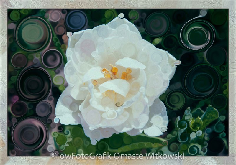 Glorious White Rose Abstract Flower