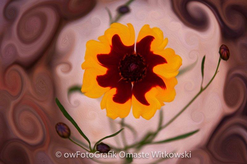 Mysterious Lady or Enchanted Flower Omaste Witkowski owfotografik.com