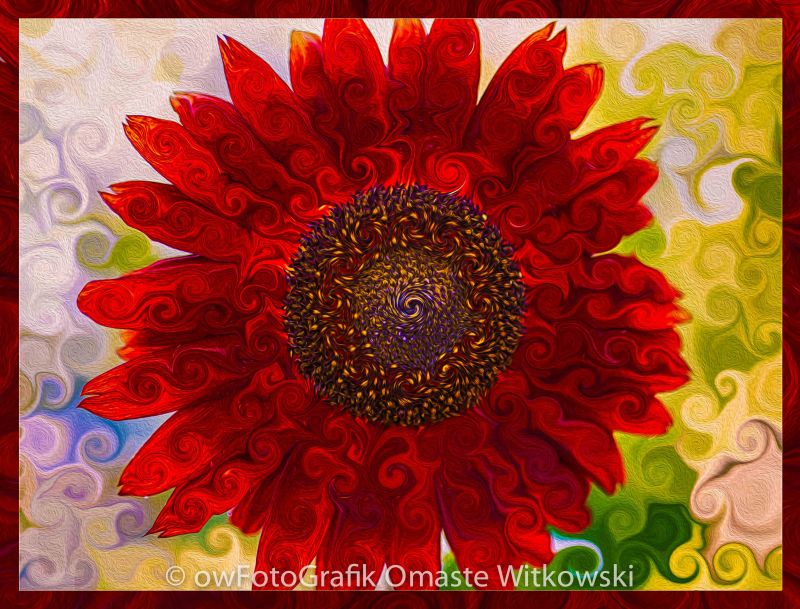 Red Red Abstract Sunflower