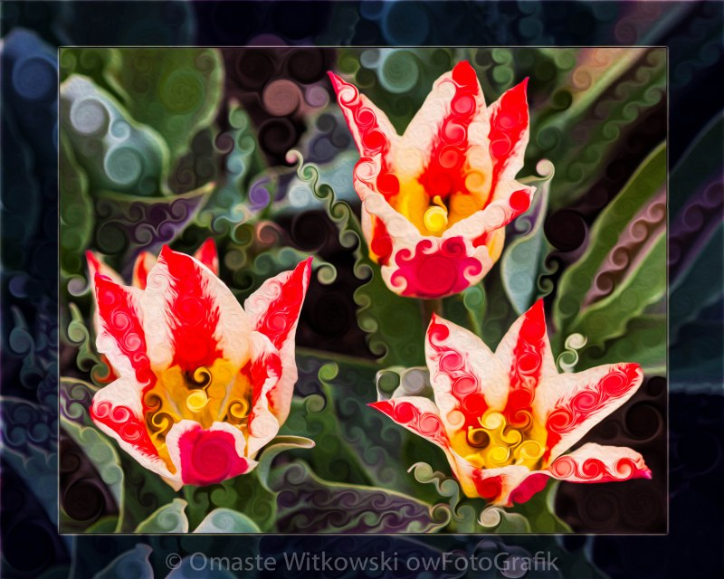 Three Striped Tulips in an Abstract Garden Painting Omaste Witkowski owFotoGrafik.com