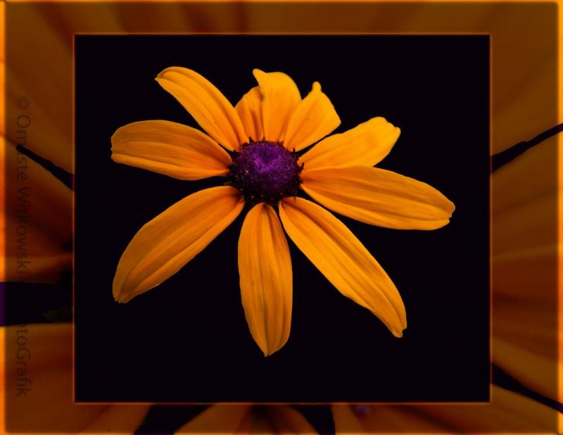 A Yellow Burst of Sunshine Floral Photograph Omaste Witkowski owFotoGrafik.com