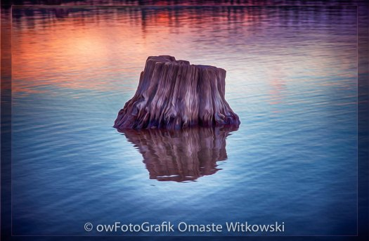 Ancient Tree Reflecting the Sunrise