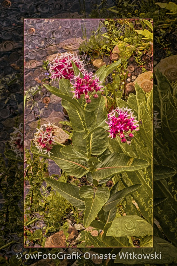 Milkweed Loving a Mountain Stream Abstract Flower Painting