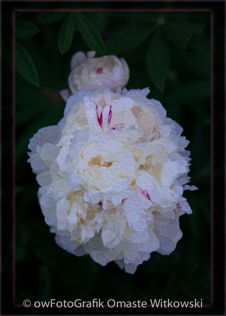 White Peony and Companion Abstract Flower Painting