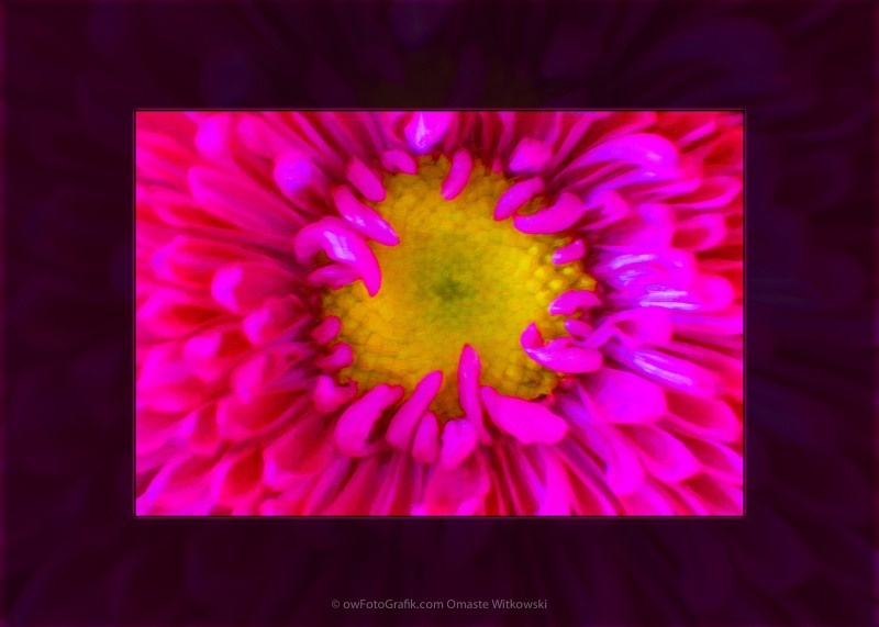 Pink Petals Envelop a Yellow Center An Abstract Flower Painting