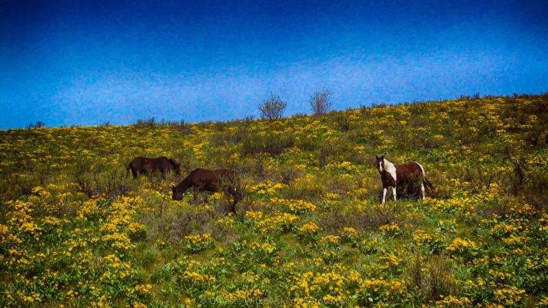 Horses on a Hillside Landscape Art by Omaste Witkowski owFotoGrafik.com
