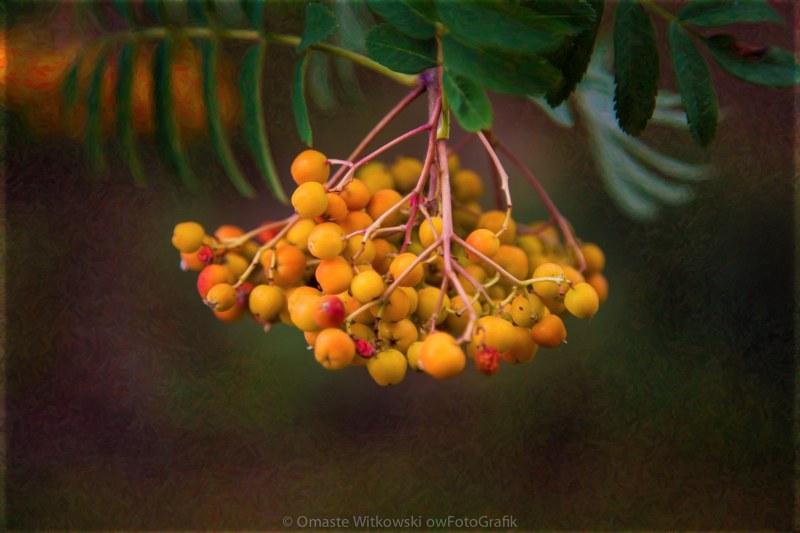 Bright Bursting Berries Garden Art by Omaste Witkowski owFotoGrafik.com