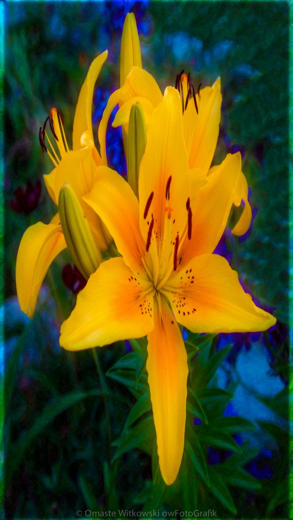 Alluring Yellow Lilies In An Abstract Garden by Omaste WItkowski owFotoGrafik.com