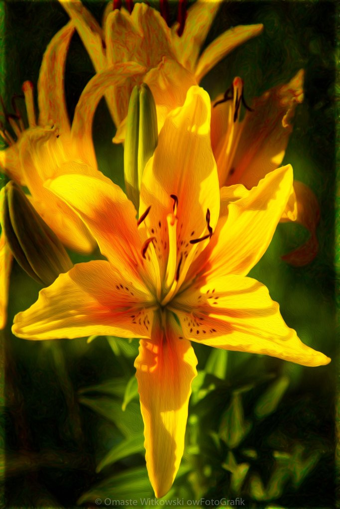 Enticing Bloom of Yellow And Orange Lilies Garden Art by Omaste Witkowski owFotoGrafik.com