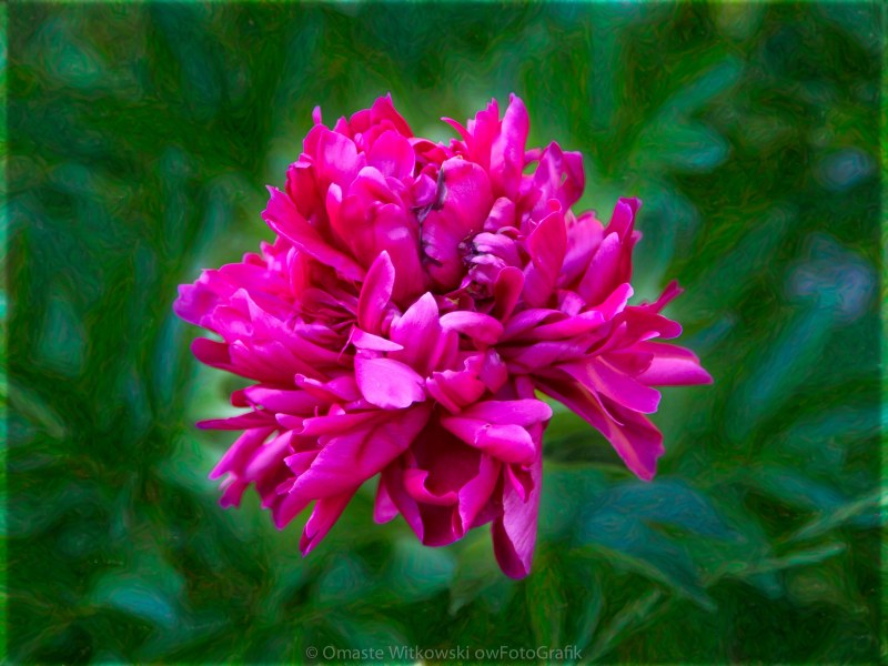 Pretty In Pink Garden Art by Omaste Witkowski owFotoGrafik.com