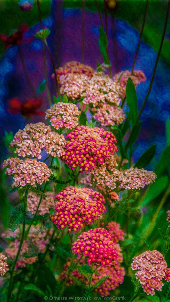 Pretty Pink Yarrow In An Abstract Garden Artwork by Omaste Witkowski owFotoGrafik.com