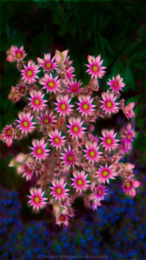 Promising Pink Petals Abstract Garden Art by Omaste WItkowski owFotoGrafik.com