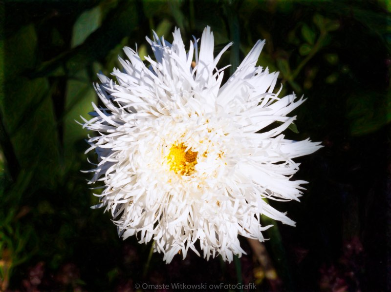 White Zen Flower Garden Art by Omaste WItkowski owFotoGrafik.com